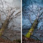 Winterfotografie vorher/nachher